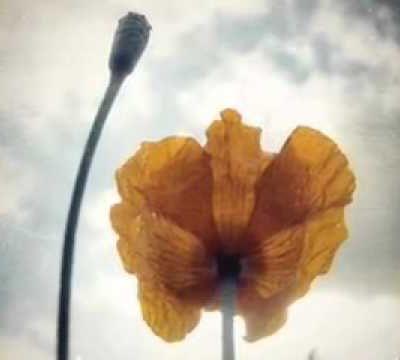 le papillon*Alphonse de Lamartine