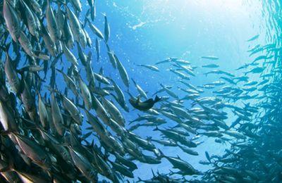 Climat : la moitié des poissons de haute mer a fui les eaux équatoriales