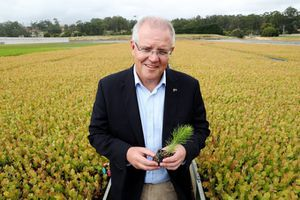 Le gouvernement australien va planter un milliard d'arbres pour sauver la planète