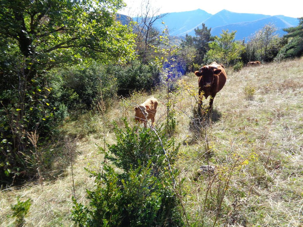 Randonnée Le Chaffal  la Vacherie