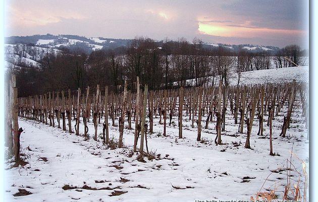 Vignoble du Jurançon sous la neige