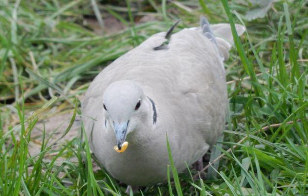 Les oiseaux hier .... les autres ;-)