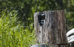 How to Hide a Trail Camera from Humans