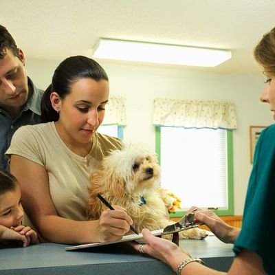 Emergency Training For Veterinary Receptionists