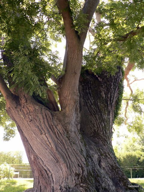 Album - nature-paysages-arbres