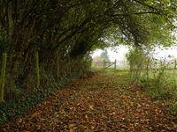 Et pour nous, en cette saison, c'est un plaisir de marcher dans les feuilles mortes et dans des odeurs de sous-bois. On se croirait dans la forêt.