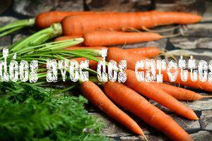 5 idées avec des carottes...