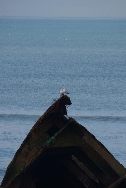 Album - Monde-maritime