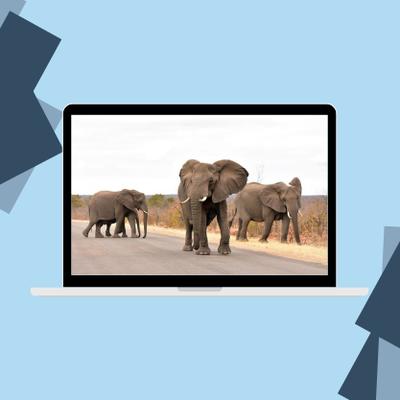 Où faire du safari pas cher en Afrique du Sud ?