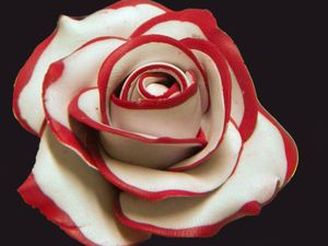 Fabrication d'une rose à pétales avec un liseré de couleur - Fleur à pétales bicolorés type marguerite -