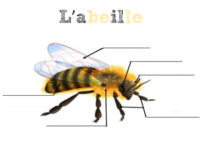 Les abeilles : suite du projet