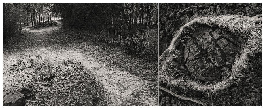 Les photographies ont été principalement réalisées à Montpellier, au parc Fontcolombe en 2011 et à la bambouseraie d'Anduze en 2018.  Les montages sont de 2018 et de 2020.