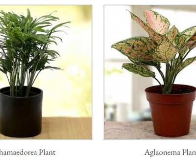Beat The Heat With These Mothers Day Plants