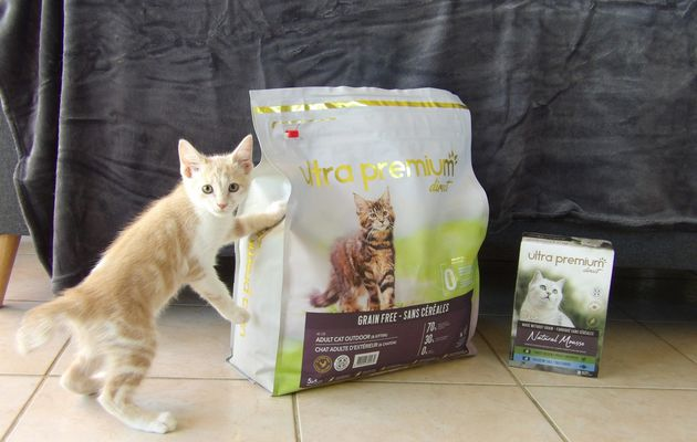 Pixel a testé l'alimentation chaton Ultra Premium Direct