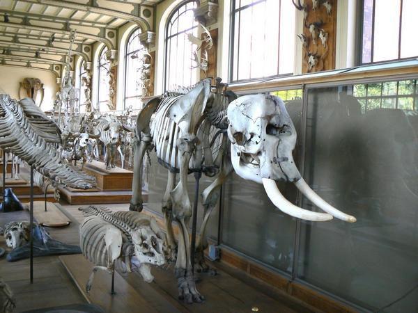 Galerie de Paléontologie du jardin des Plantes, Paris