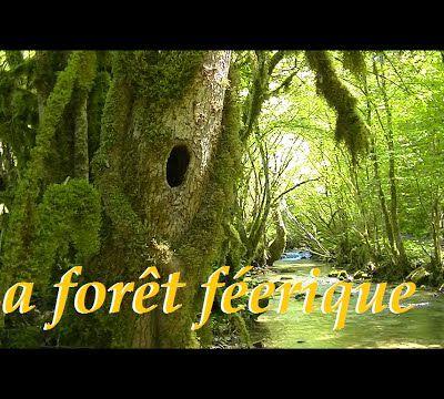La forêt étrange et féerique en France