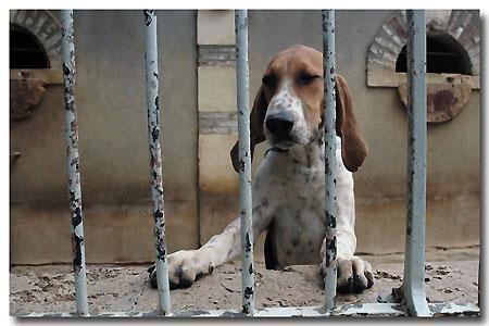 """<strong>Cheverny a servi de modèle à Moulinsart. Tintin y est donc très présent, mais il y a aussi une meute de chiens de chasse...<br /><em><a href=""""http://www.maitrepo.com/article-1703181.html"""" target=""""_blank"""">-> Lire l'article associé</a><br"""