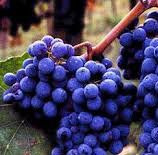 #Red Sangiovese Producers Pennsylvania Vineyards