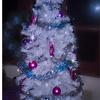 • Merry Xmas! •
