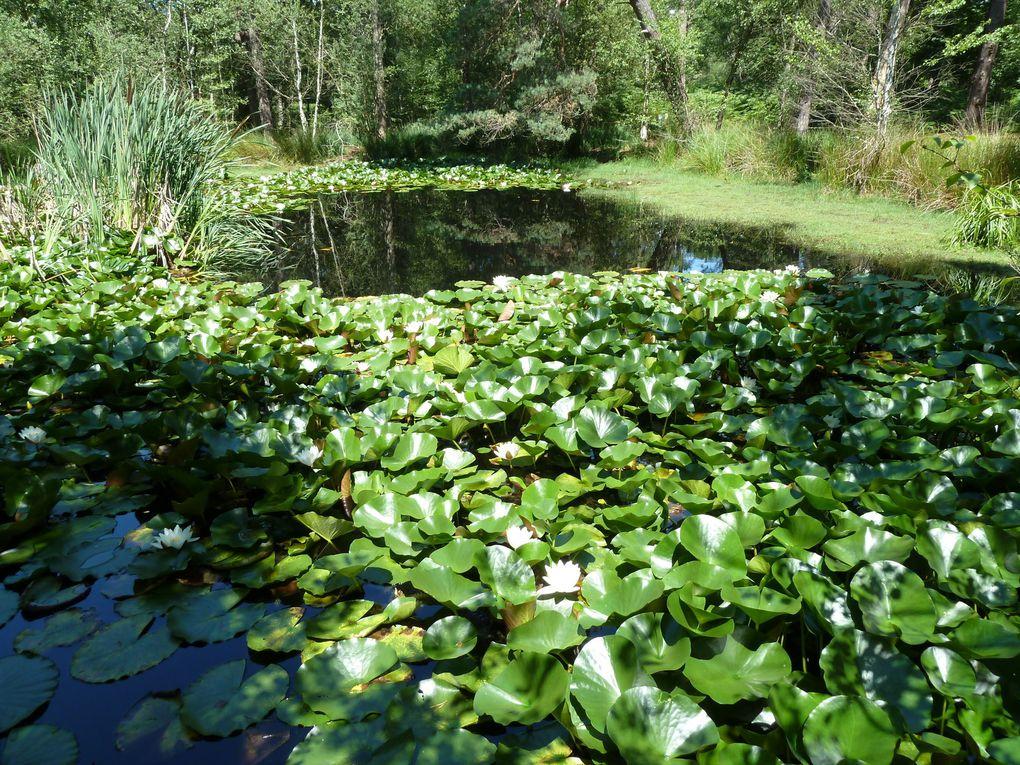 Randonnée de Fontainebleau-Forêt à Fontainebleau-Avon - 15 km.