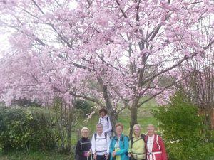 Photos porte-bonheur sous le cerisier !