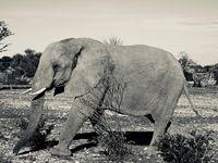 """""""Je me dis parfois que si ma tête est si grosse, c'est parce qu'elle est pleine de rêves"""" ( John Merrick ) - The Elephant Man -"""