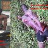 Côte d'ivoire: Un Jeune ivoirien tué à la machette par les soldats Pro-Ouattara