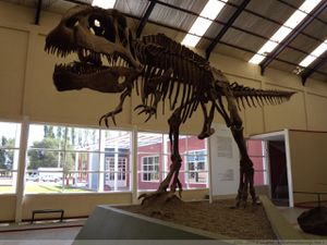 Giganotosaurus skeleton - doc. Bachmann Museum Villa El Chocon