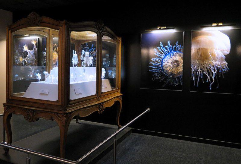 Photographies de quelques modèles de verre de Léopold et Rudolf Blaschka exposés au muséum d'hitoire naturelle de Genève.