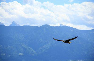 Le Chant de l'Aigle. 6 Juin stage chamanique quantique