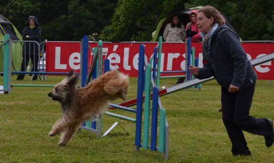 Encouragé par son maître tout au long du parcours, le chien franchit les obstacles, les contourne. Dans cette épreuve d'agilité, la confiance et la complicité qui lient maîtres et chiens sont les clés de la réussite. (Le Télagramme)