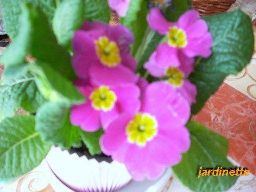 toutes les fleurs