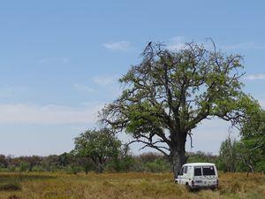 l'eau de l'Okavango manque beaucoup dans la majorite des endroits