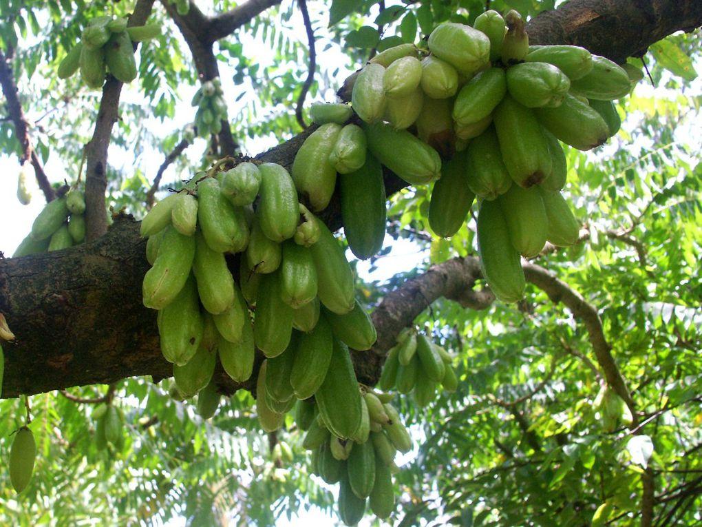 Bouchées de Manioc aux Bilimbis et Thon Fumé