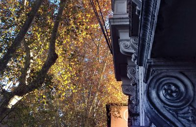 l'automne à Trastevere