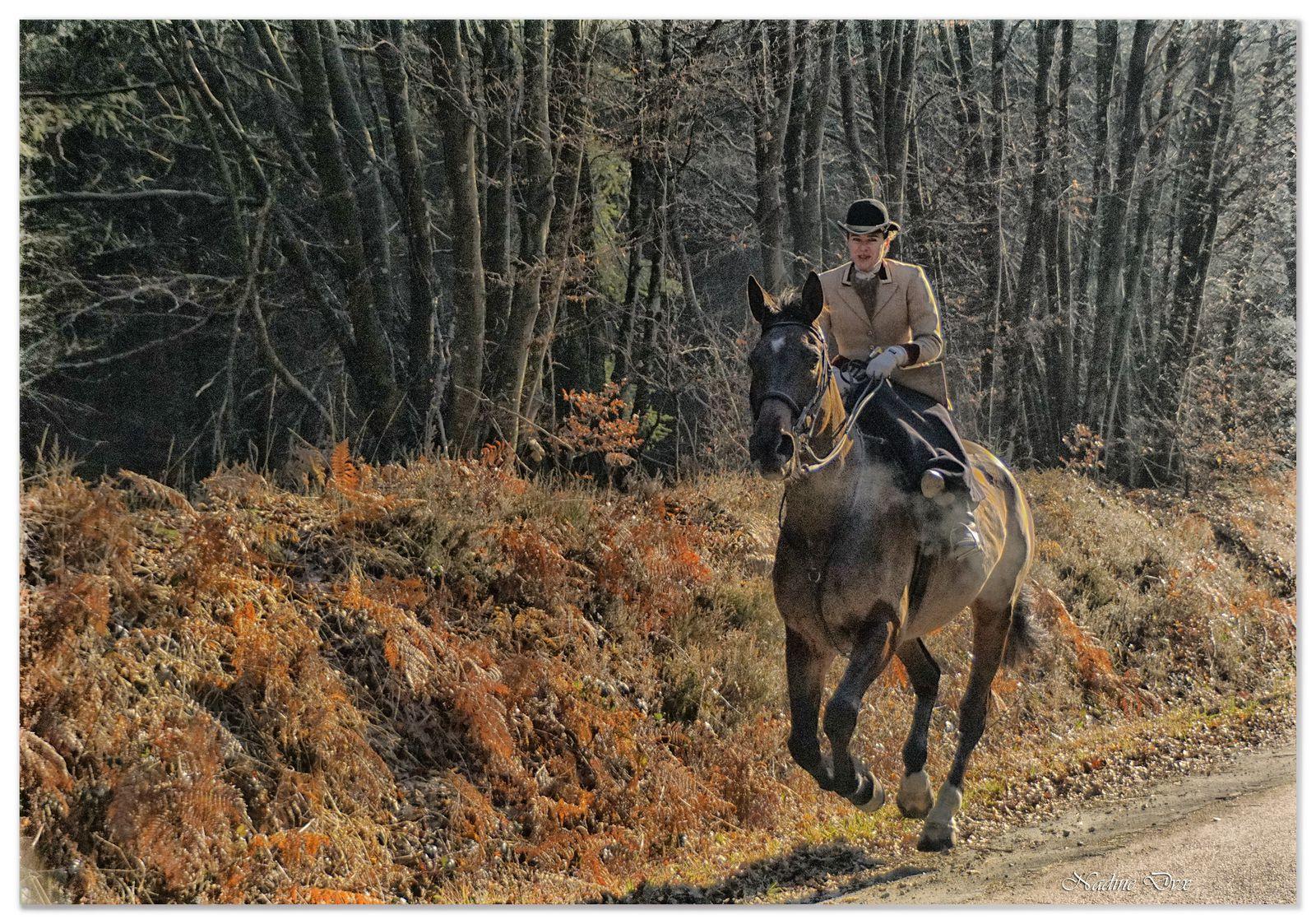 Forêt de Bercé - Faune et flore - Sarthe