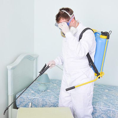 Pest Control Tips To Keep The Bugs Away