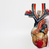 Anatomical Heart Model by MAAS_Collection