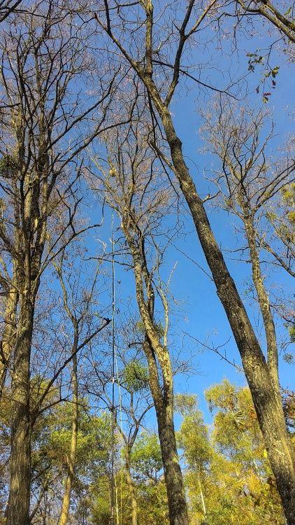 destruction nid de frelons asiatiques
