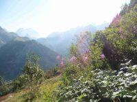 Depuis le sentier on distingue à gauche la Grande Casse avec l'Aiguille de la Vanoise. Une partie de glaciers. Derrière les adénostyles, une des Dents de la Portetta.