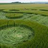 Voyage au centre des Crop Circles