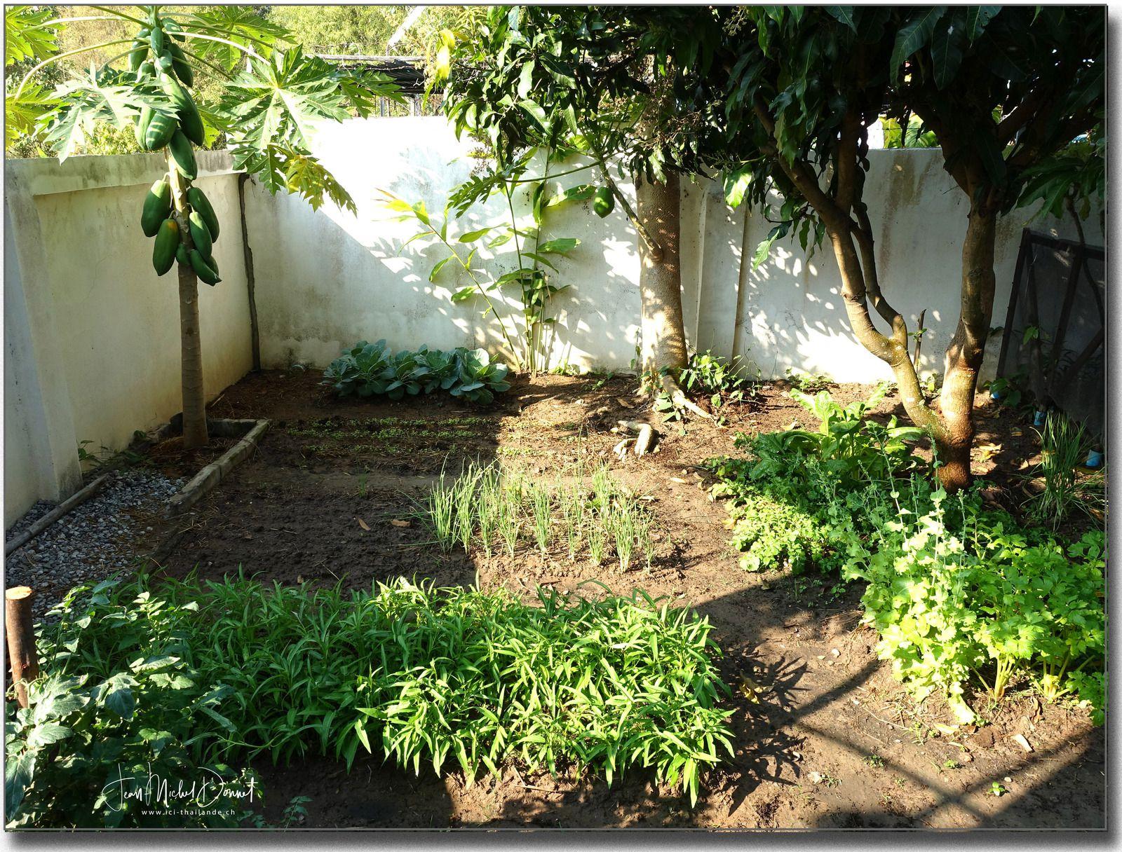Petit tour du jardin (février 2021)