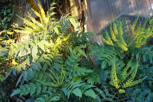 Je change de place un arbuste....