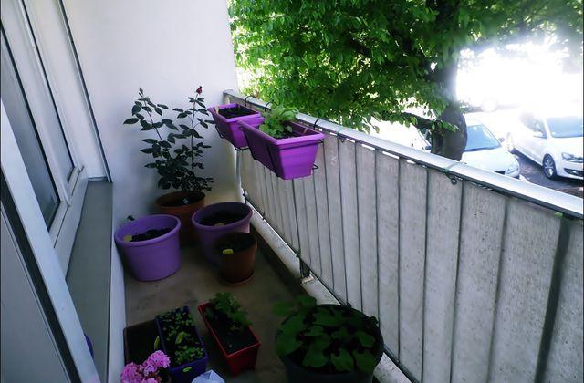 Notre petit potager (au balcon) ! #2