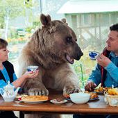 Russian family sit down to dinner with a 300lb BEAR at the table