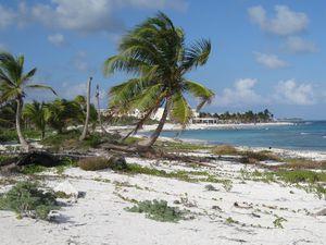 Playa playa playa