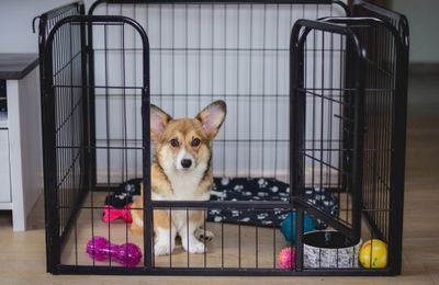 Points To Consider When Buying A Pet Dog Crate