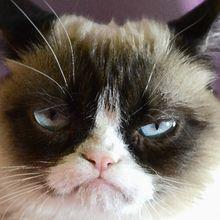 Pourquoi les chats mangent ils leurs bébé?