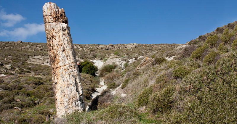 Lesbos, Sigri petrified forest - photo Lesvosgeopark