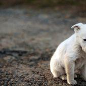 Pétition : Stop à l'abandon de vos animaux en vacances